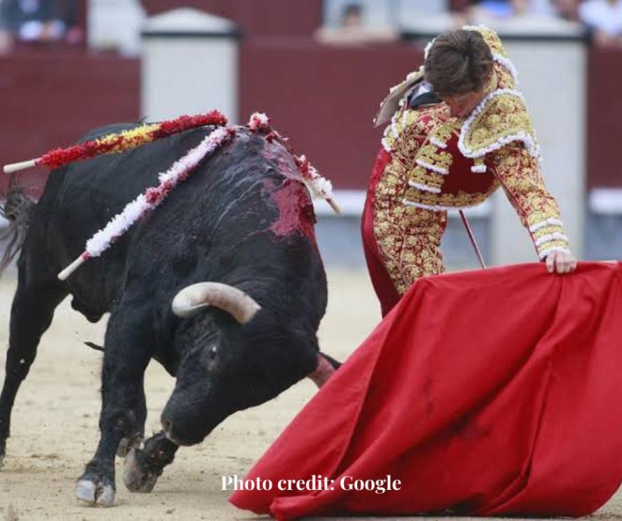 Do not be bull headed